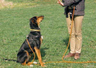bagira-szkolenia-psow-behawiorysta-06