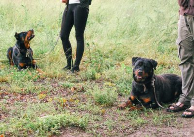 bagira-szkolenia-psow-behawiorysta-09