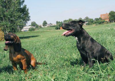 bagira-szkolenia-psow-behawiorysta-101