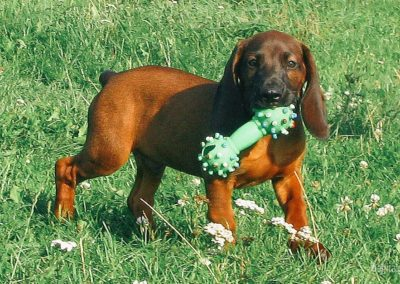 bagira-szkolenia-psow-behawiorysta-102