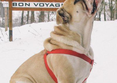 bagira-szkolenia-psow-behawiorysta-105