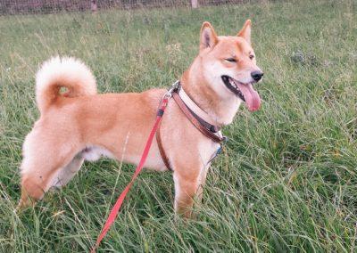 bagira-szkolenia-psow-behawiorysta-109