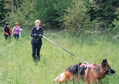 bagira-szkolenia-psow-behawiorysta-116