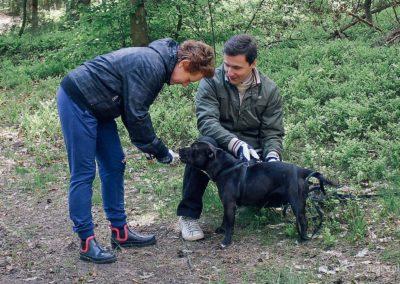 bagira-szkolenia-psow-behawiorysta-117