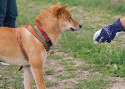 bagira-szkolenia-psow-behawiorysta-121