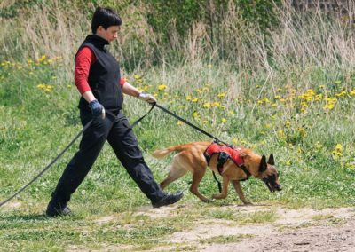 bagira-szkolenia-psow-behawiorysta-122