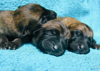 bagira-szkolenia-psow-behawiorysta-125