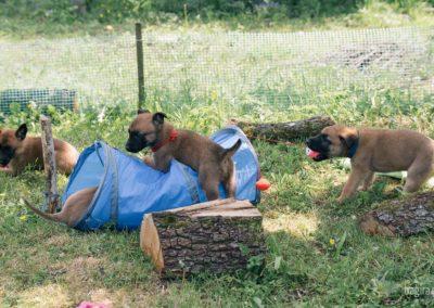 Bagira szkolenie psów behawiorysta - Psia zabawa