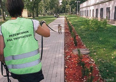 bagira-szkolenia-psow-behawiorysta-15-05