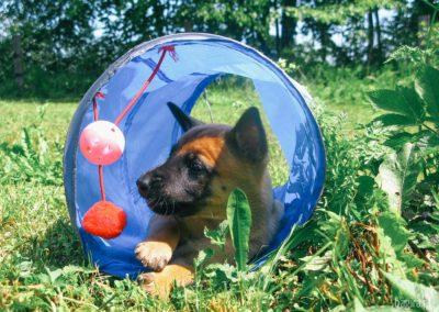 Bagira szkolenie psów behawiorysta - Psi relaks