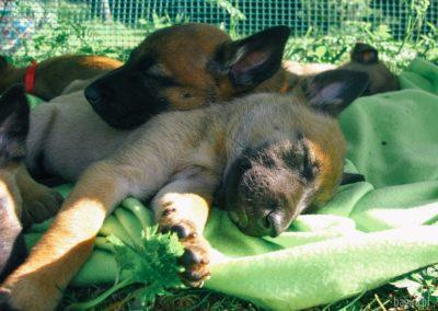 bagira-szkolenia-psow-behawiorysta-16
