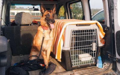 Czy trzymać psa w klatce?