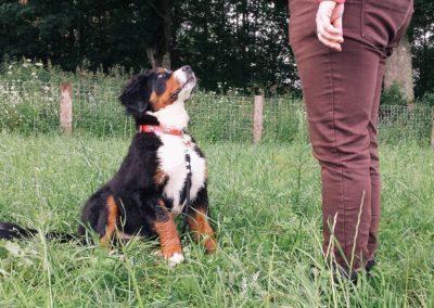 bagira-szkolenia-psow-behawiorysta-20