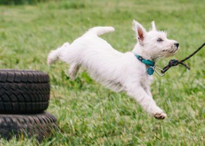 Bagira szkolenie psów behawiorysta - Agility
