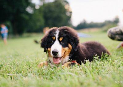 Bagira szkolenie psów behawiorysta - Piesek
