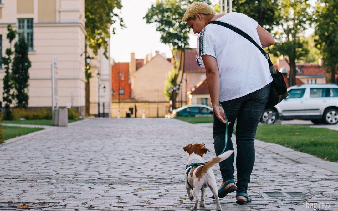 Spacer z psem – banalna sprawa…