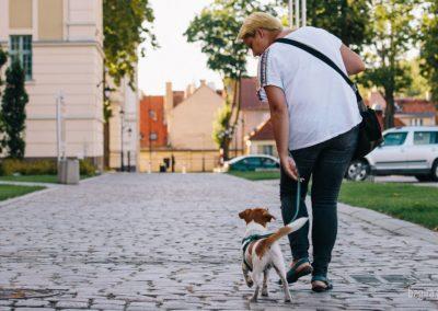 Korzyści ze spaceru z psem.