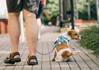 Po co psu spacer?