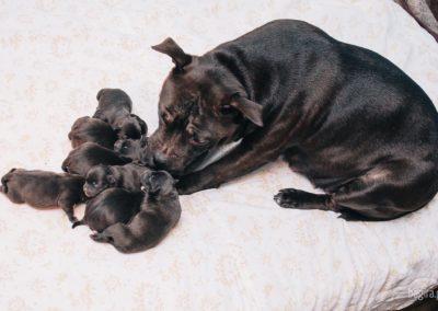 Bagira szkolenie psów behawiorysta - Mama z szczeniakami