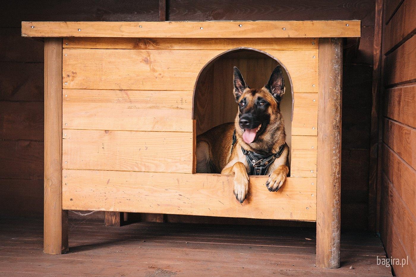 Bagira szkolenie psów behawiorysta - Hotel dla psów