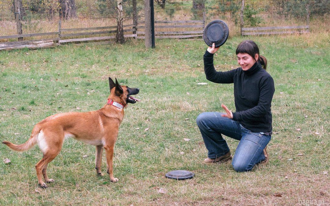 Latająca Akademia Dog Chow w Olsztynie