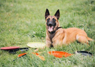 Bagira szkolenie psów behawiorysta - Frisbee