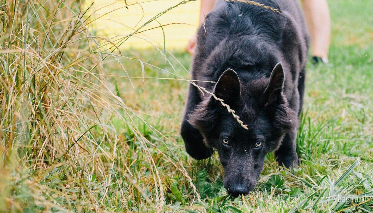 Bagira - szkolenie psów, behawiorysta - Tropienie
